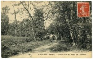 1919_Brindas_Sous-bois_Izeron